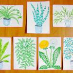 2. Мое любимое комнатное растение