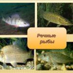 Рыбки в воде
