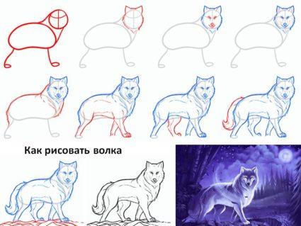 животных способы схемы рисования
