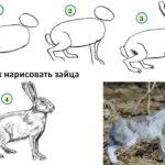 Схема поэтапного рисования зайца