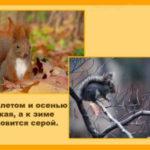 «Лесные животные»