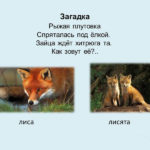 Слайд и изображением лисы