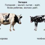 Слайд с изображением коровы