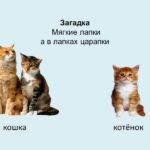 Слайд с изображением кошки