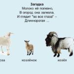 Слайд с изображением козы