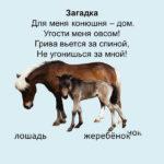 Слайд с изображением лошади
