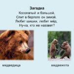Слайд с изображением медведя