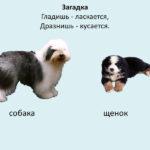 Слайд с изображением собаки