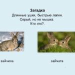 Слайд с изображением зайца
