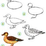 Схема рисования утки