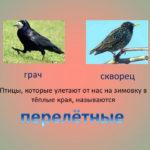 Слайд о перелётных птицах