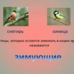 Слайд о зимующих птицах