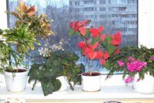 Воспитанники подготовительной группы не только наблюдают и ухаживают за комнатными растениями в группе, но и с удовольствием их рисуют