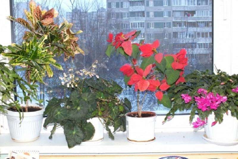 Рисование  «Комнатное растение» в подготовительной группе: специфика  проведения занятия