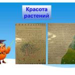 Проект Крастоа растений в начальной школе