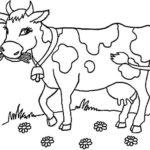 шаблон коровы