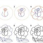 Круглый бутон розы