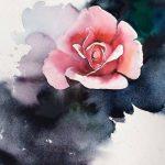Нежная роза на тёмном фоне