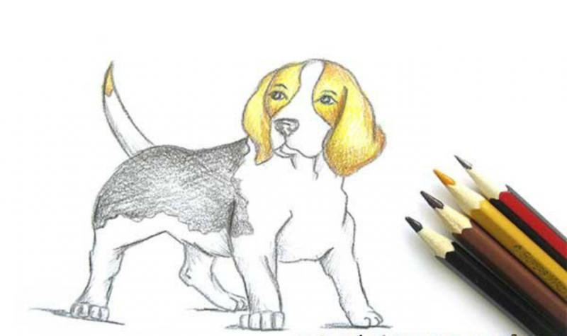Рисунок собаки и четыре карандаша справа