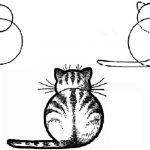 Сидящий кот вид сзади